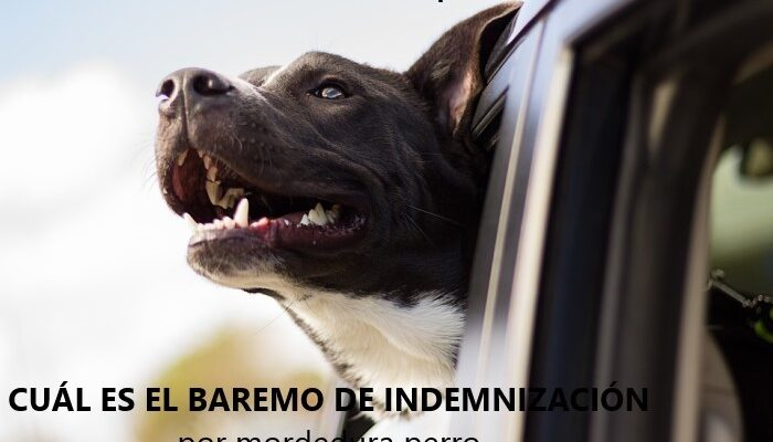 mordedura perro