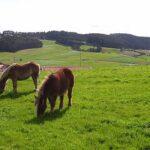 Subvenciones para jovenes ganaderos asturias